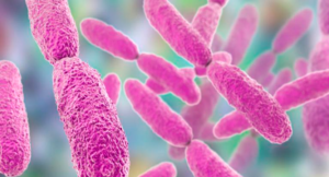Una bacteria, responsable del Higado graso no alcohólico.