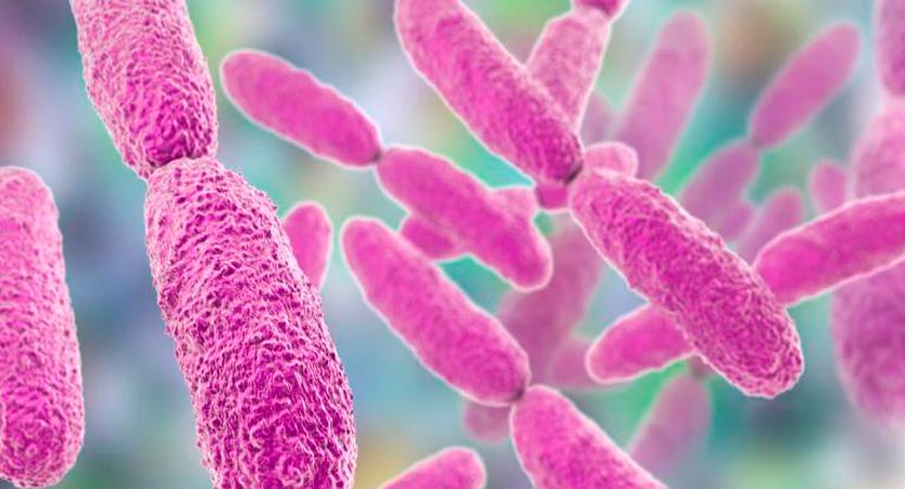 Una bacteria podría ser la responsable del Higado graso no alcohólico.